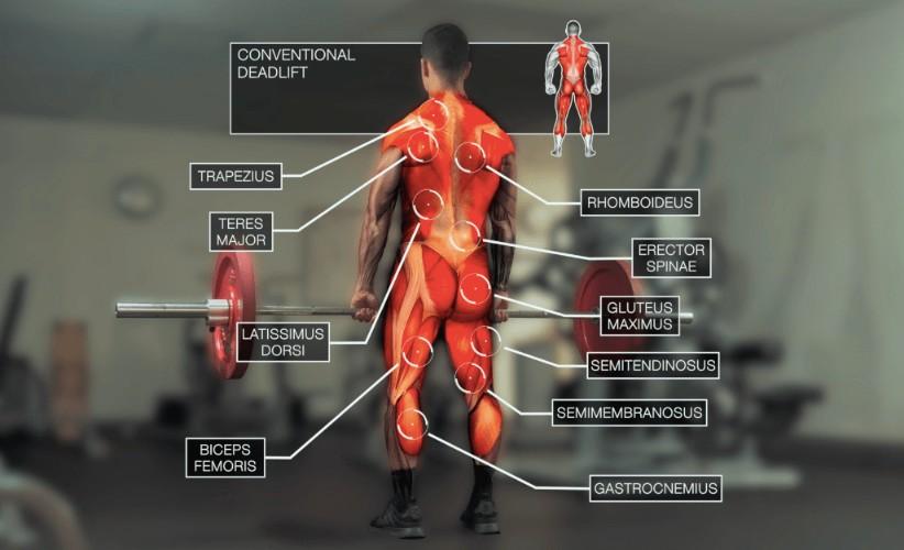 Músculos que intervienen en el peso muerto convencional